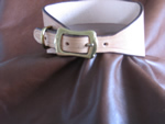 Tan Lurcher / Whippet Collar